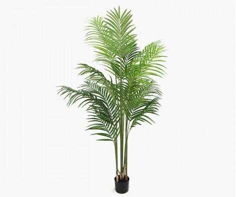 Waterfall palm