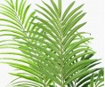 Waterval Palm