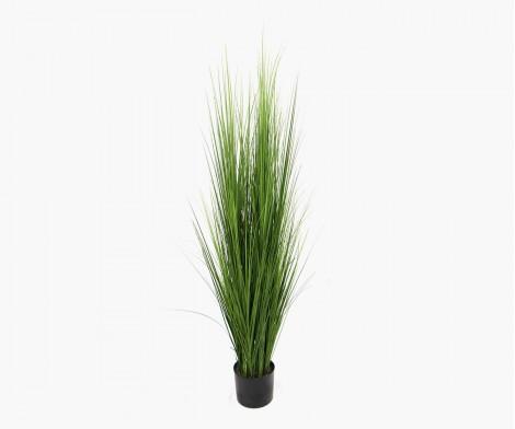 Grandes herbes